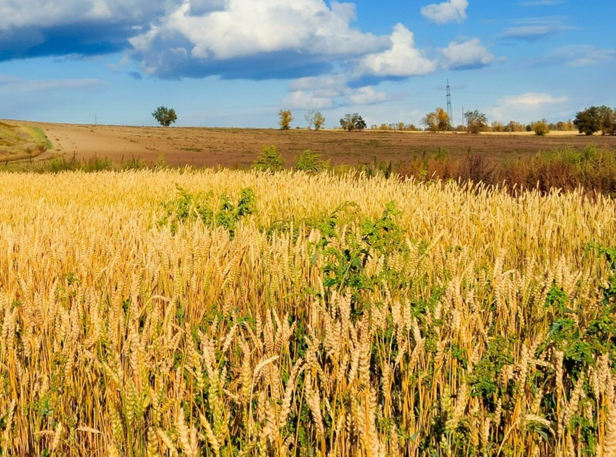The Wheat and the Tares - Catholic Standard - Multimedia Catholic News